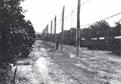 Fig. 3.  Artificial windbreaks in Australia (from Freeman, 1976).